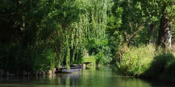 Barque dans le marais