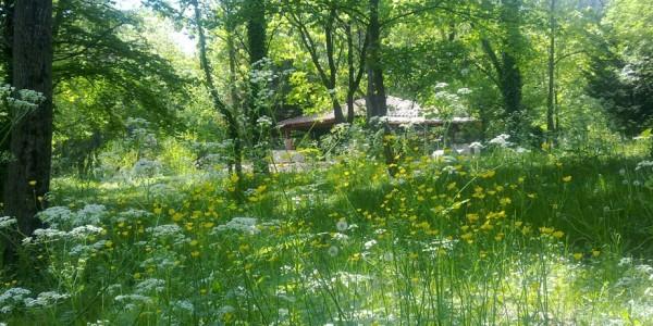 Camping au printemps
