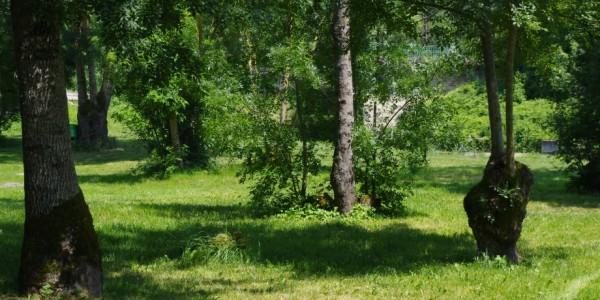 Frênes têtards © CMT17 A. BIRARD