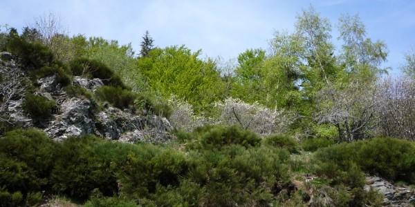 Arboretum Hort de Dieu