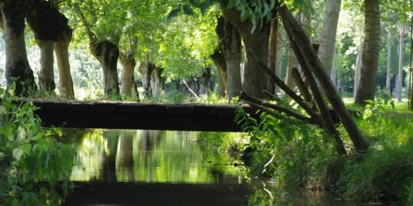 Marais Poitevin : rando canoë-vélo dans le labyrinthe d'eau de la Venise Verte