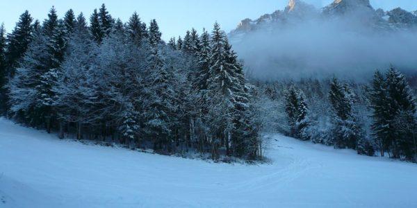 paysage du petit matin